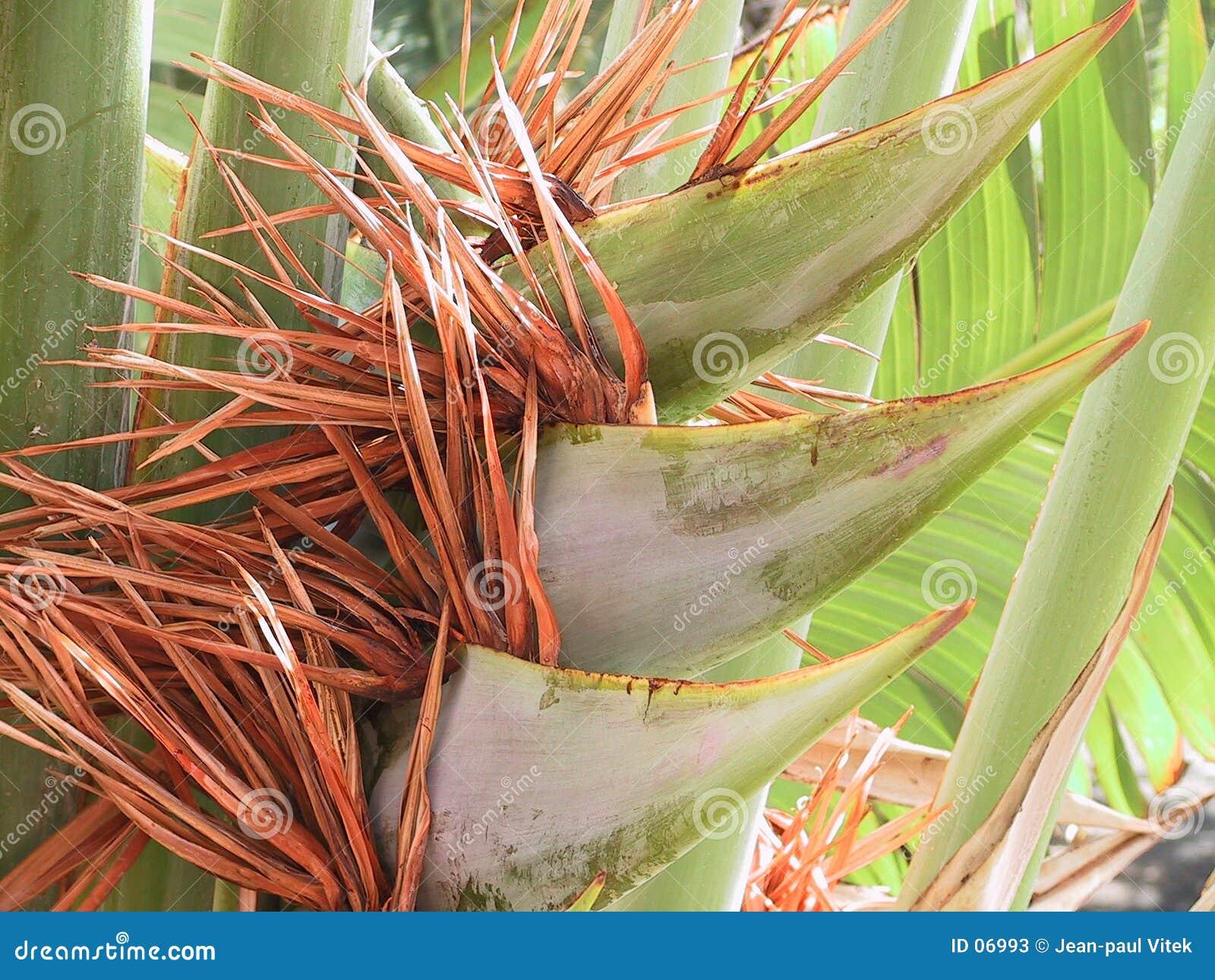 Palm met bloesem
