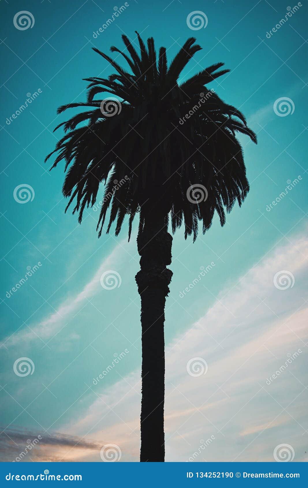 Palm met een blauwe bewolkte hemel