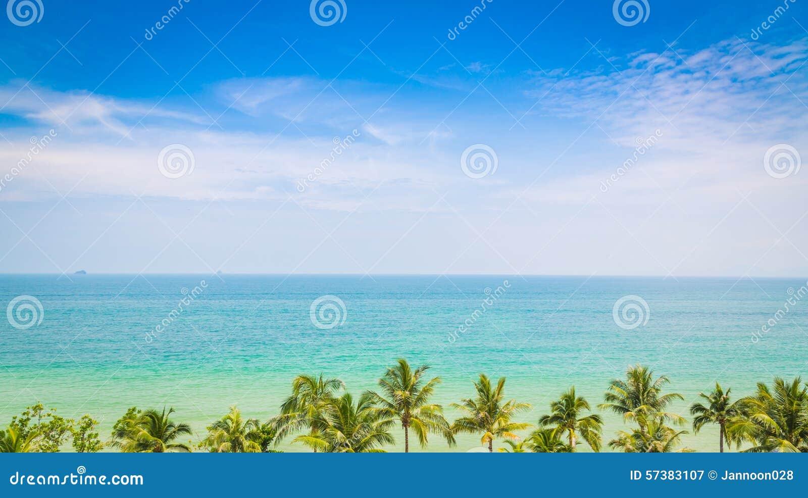 Palm met mooi zeegezicht