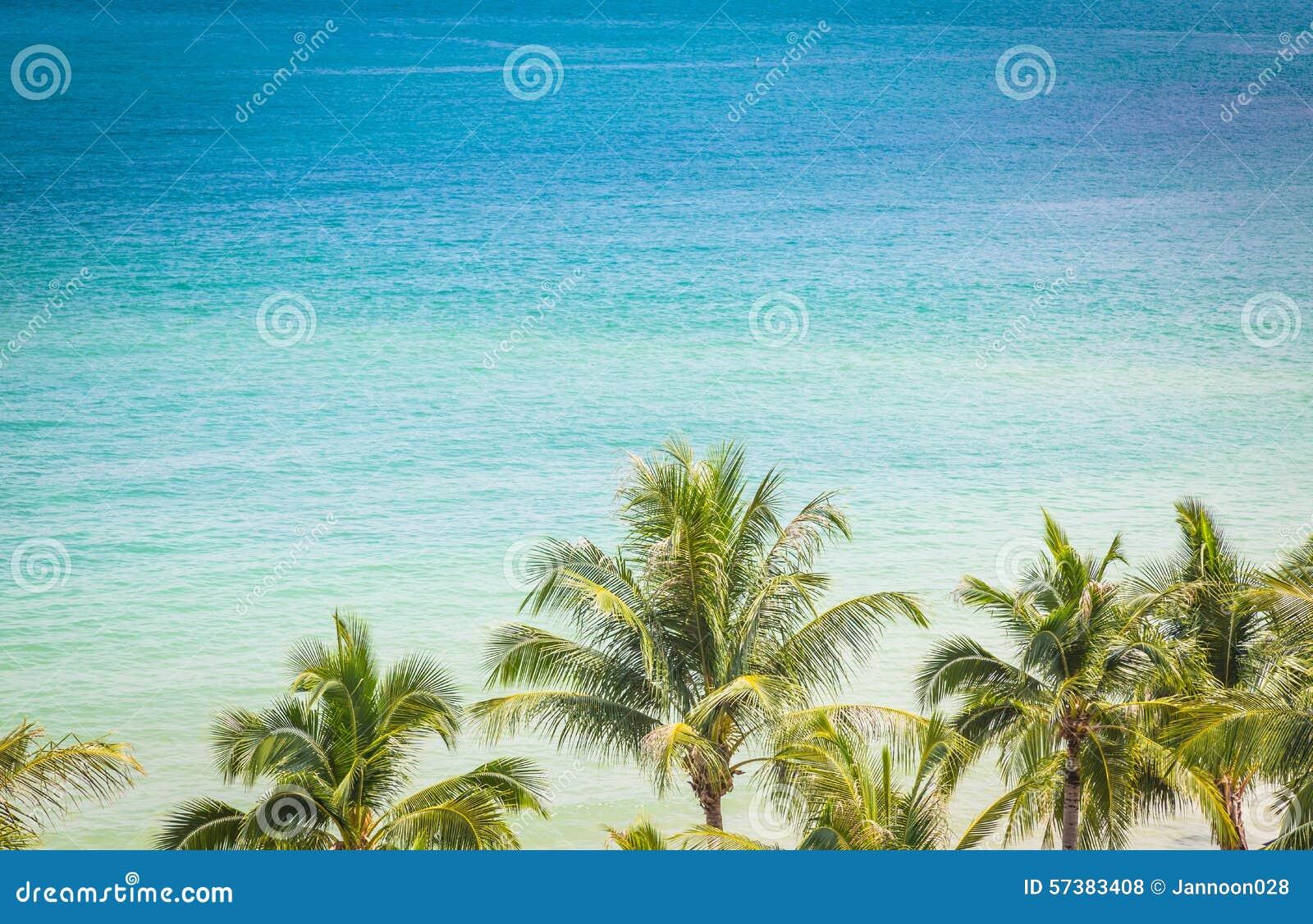 Palm met mooi zeegezicht (Gefiltreerd verwerkt beeld)