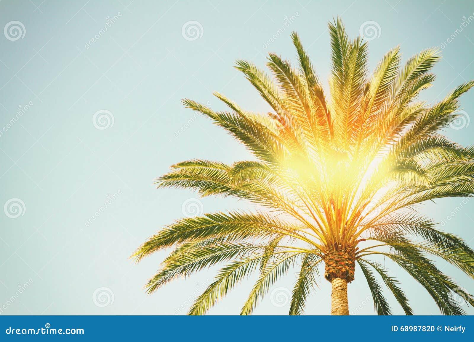 Palm met zonneschijn