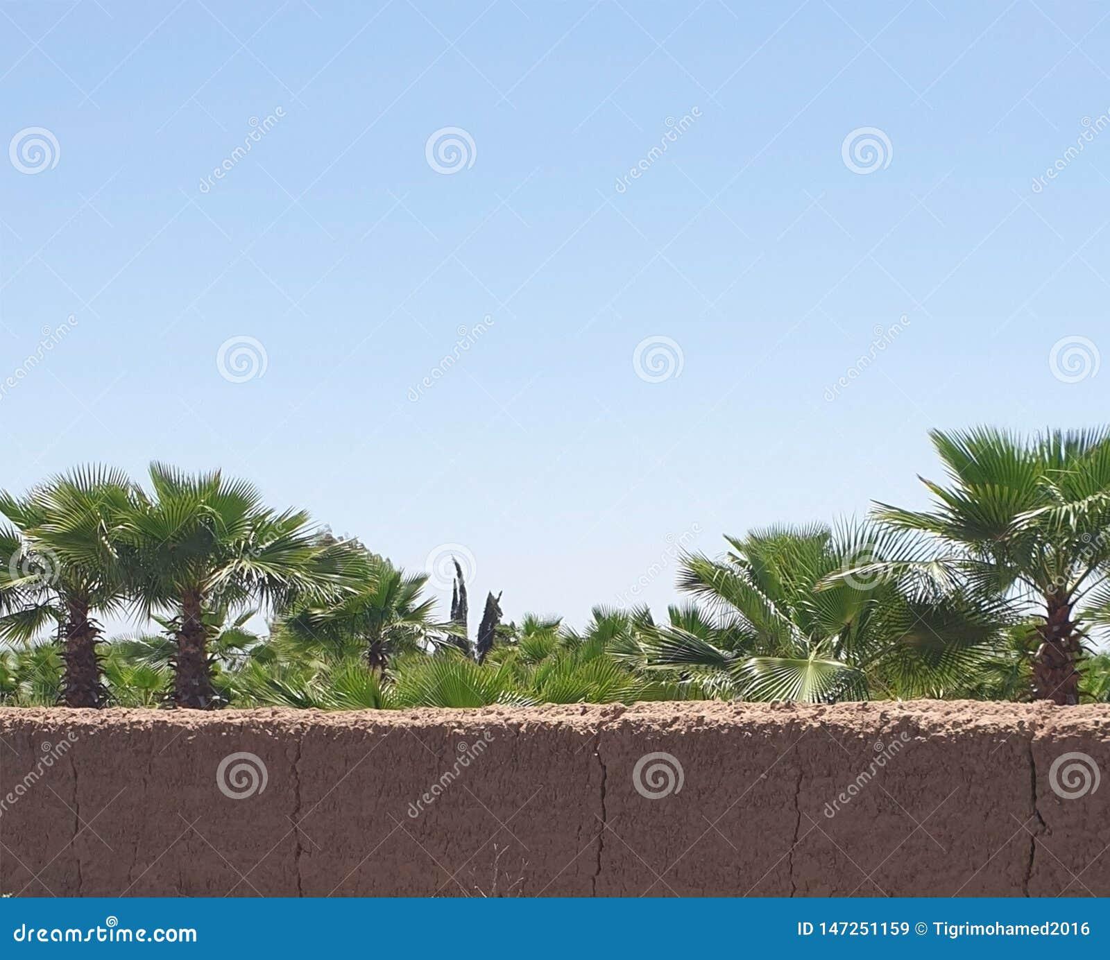Palm nurseries