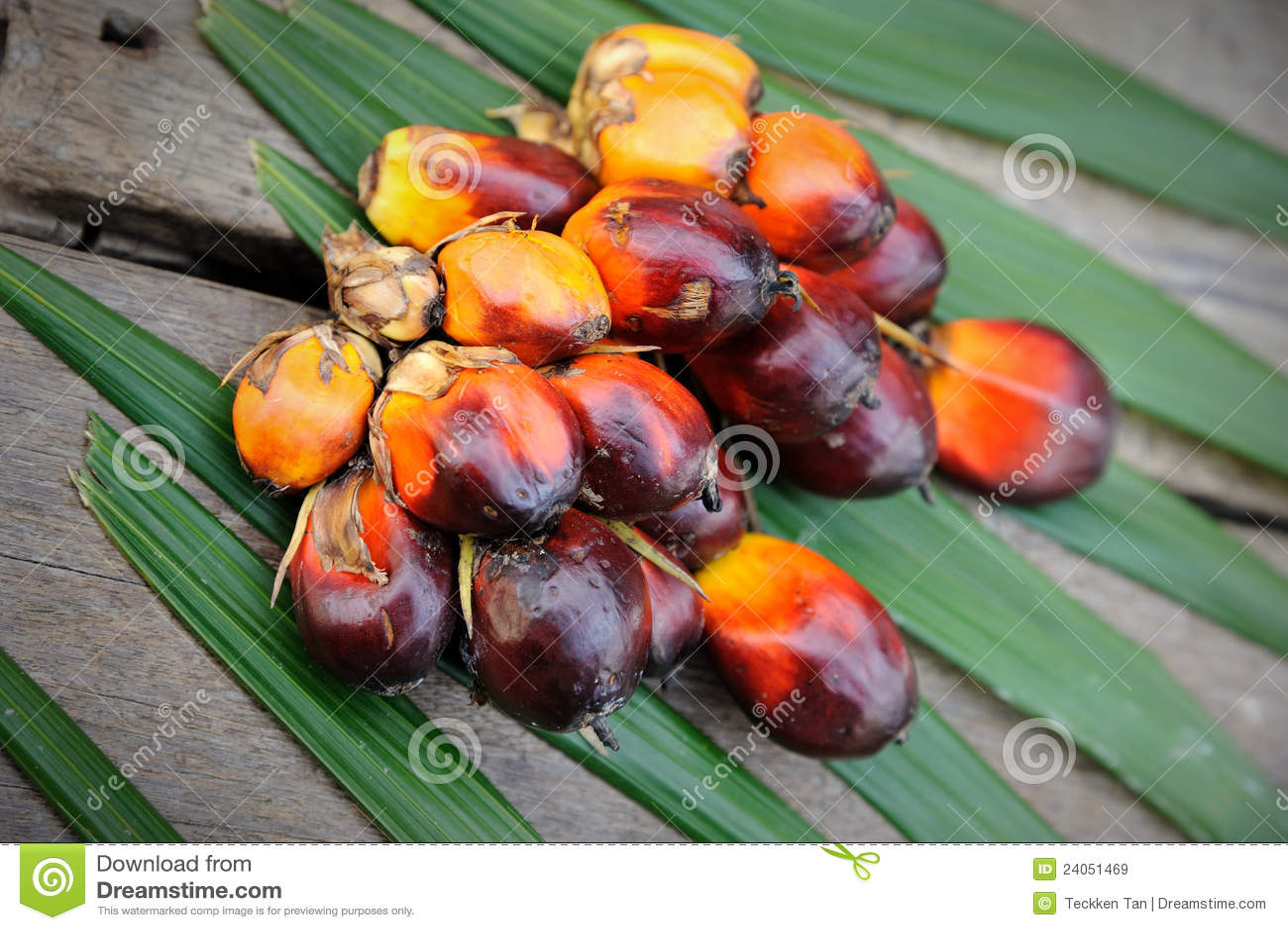 is palm fruit oil healthy fruit ninja online