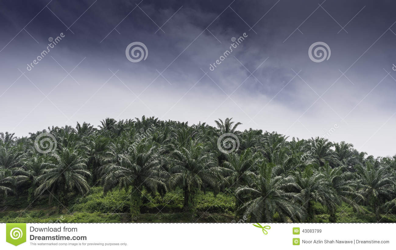 Palm oil plantation business plan