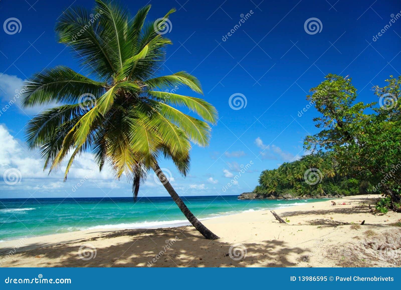 Palm op Caraïbisch strand met wit zand