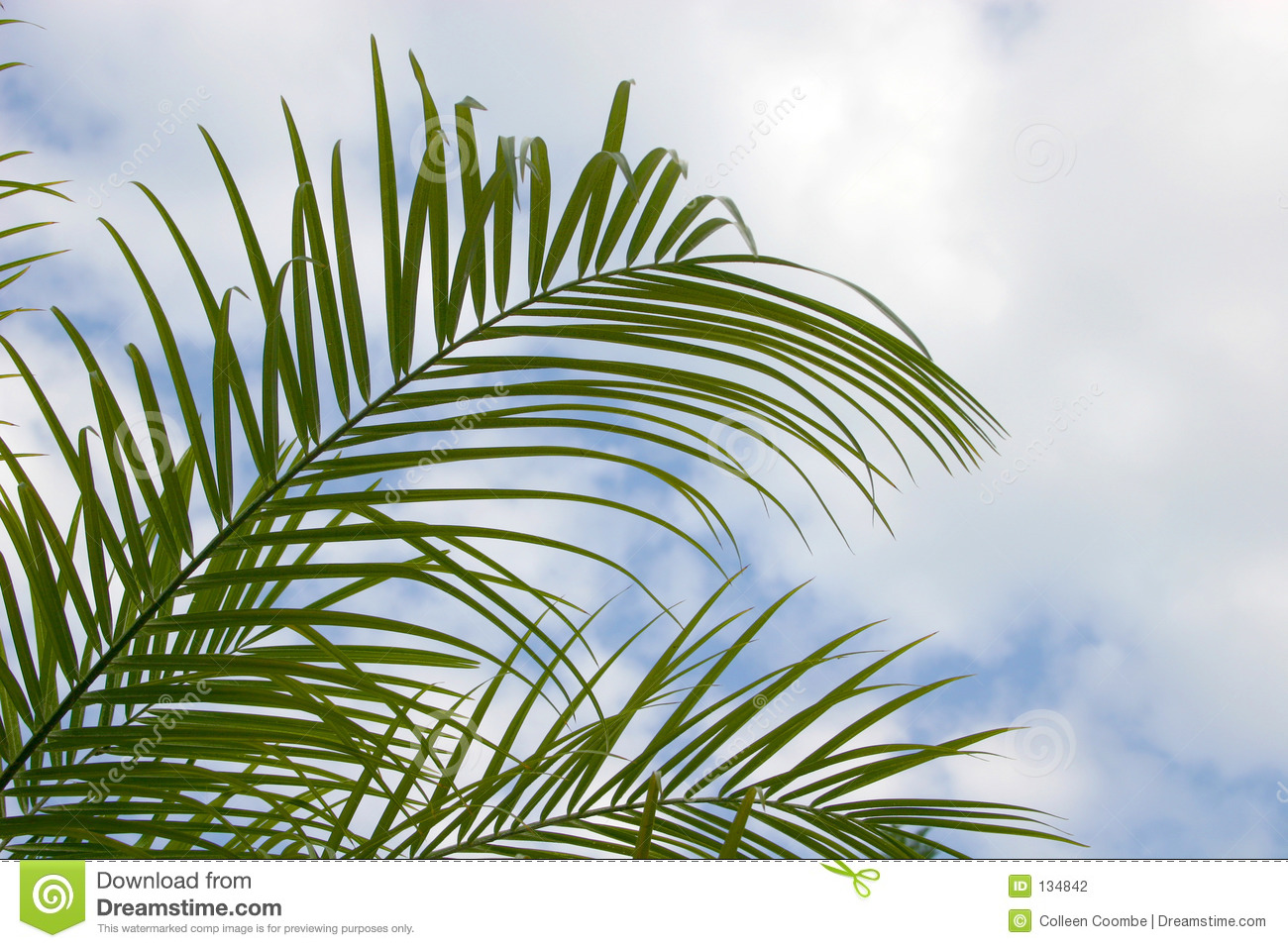 Palm Palm Fronds Stock Photography - Image: 134842