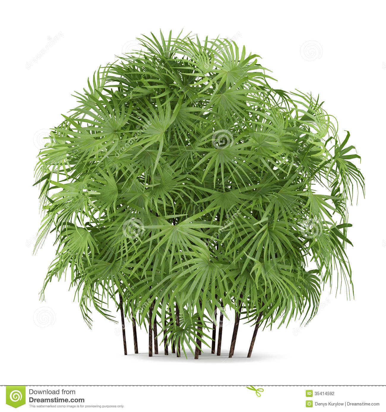 Palm Plant Bush Isolated. Rhapis Excelsa Stock Photography ... Relaxing Dog Music Audio