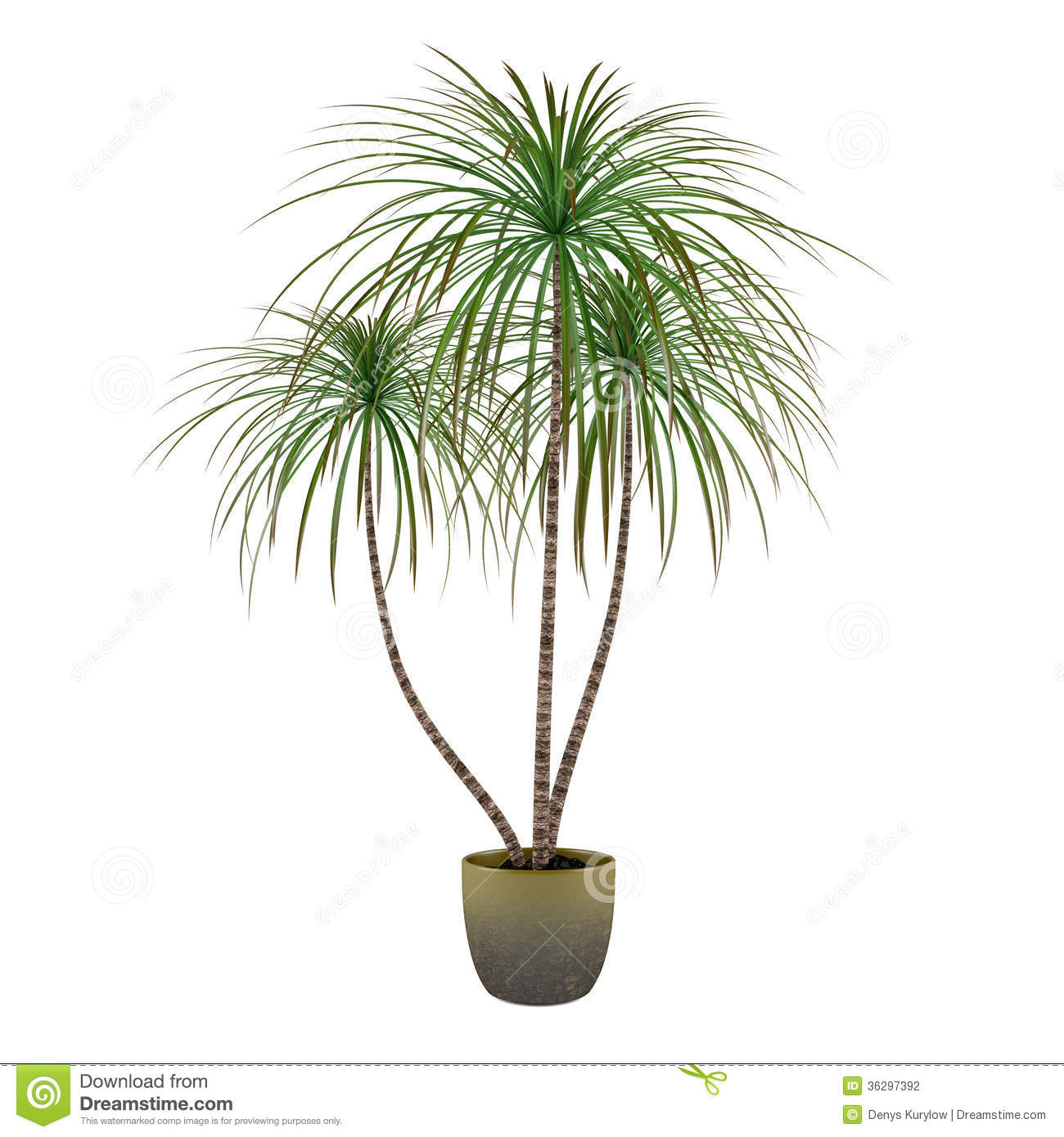 Palm Plant Bamboo Tree In The Pot Stock Illustration - Illustration on indoor foliage plants, indoor houseplants, home depot plants, types of indoor plants, indoor fruit plants, indoor blackberry plants, indoor ponytail palm, indoor palm trees, indoor palms low light, dracaena like plants, indoor potted palms, indoor tree plants, low light indoor plants, large indoor plants, indoor corn plant, tall indoor plants, indoor yucca plant, best indoor plants, indoor palm bushes, kentia palms plants,