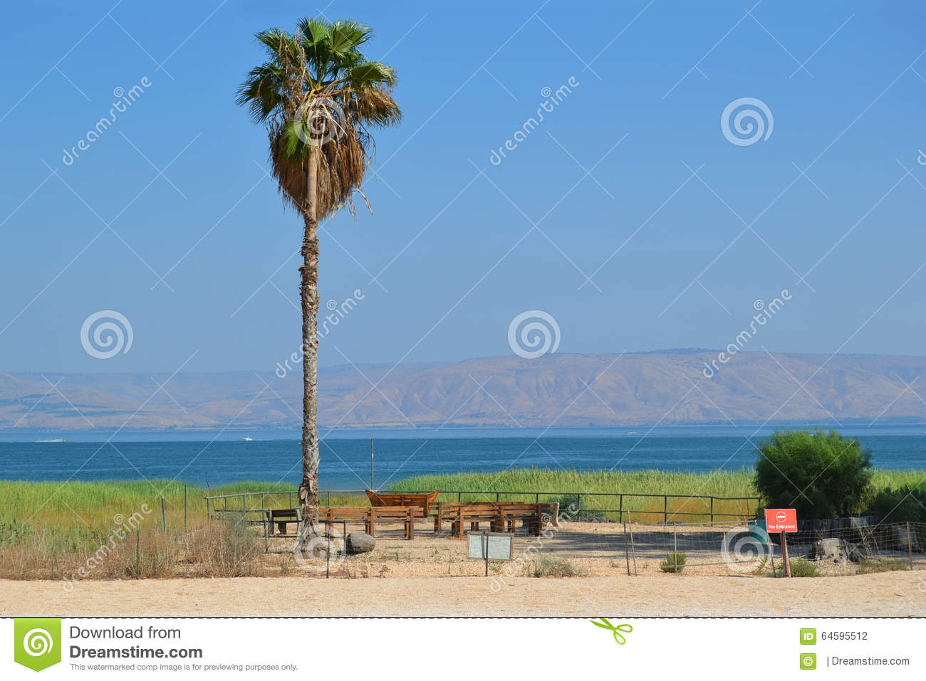 Palm on the shore