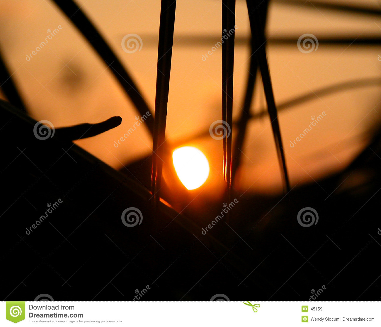 Palm sunset drzewo