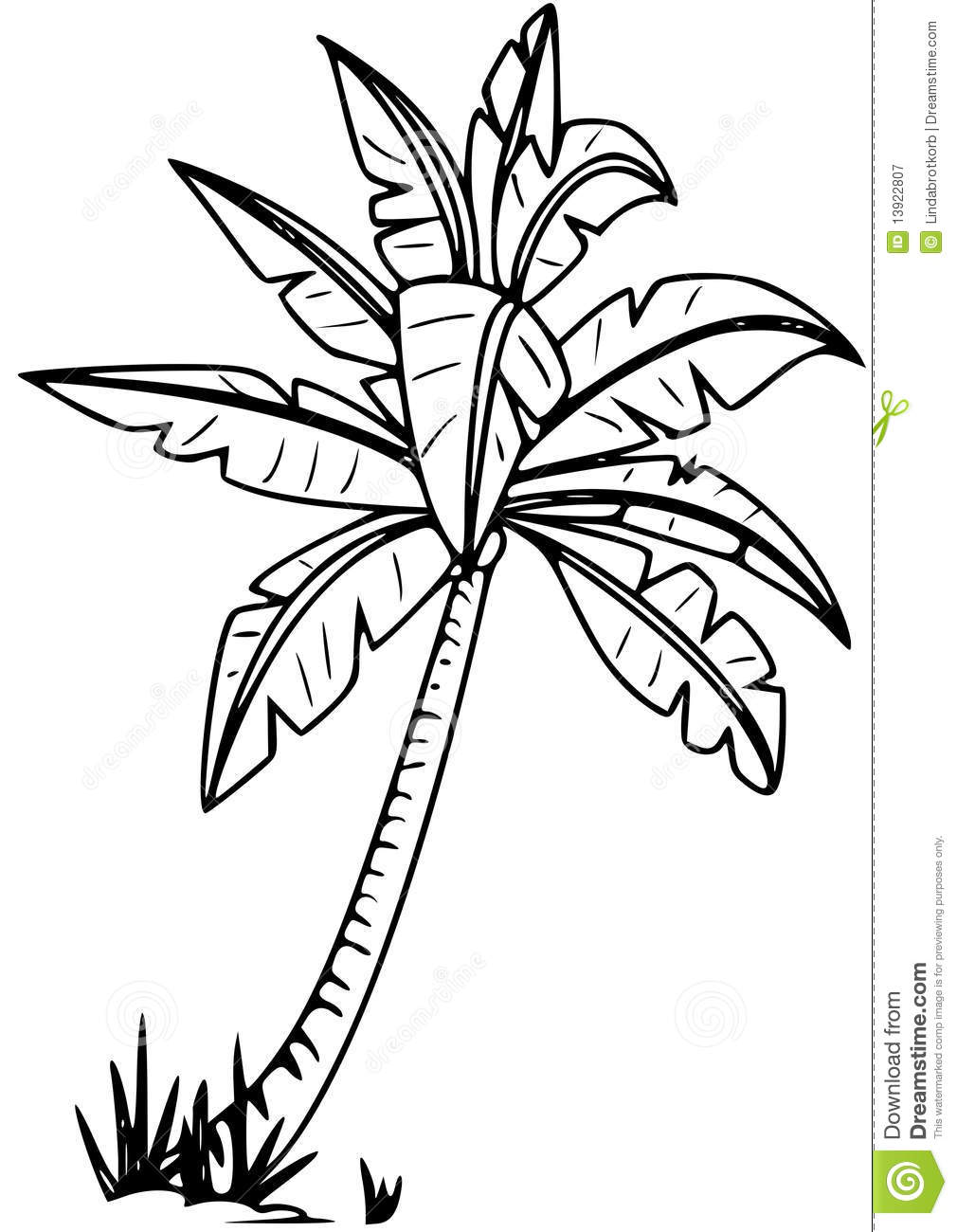Palm tree stock vector. Illustration of lineart, coconut - 13922807