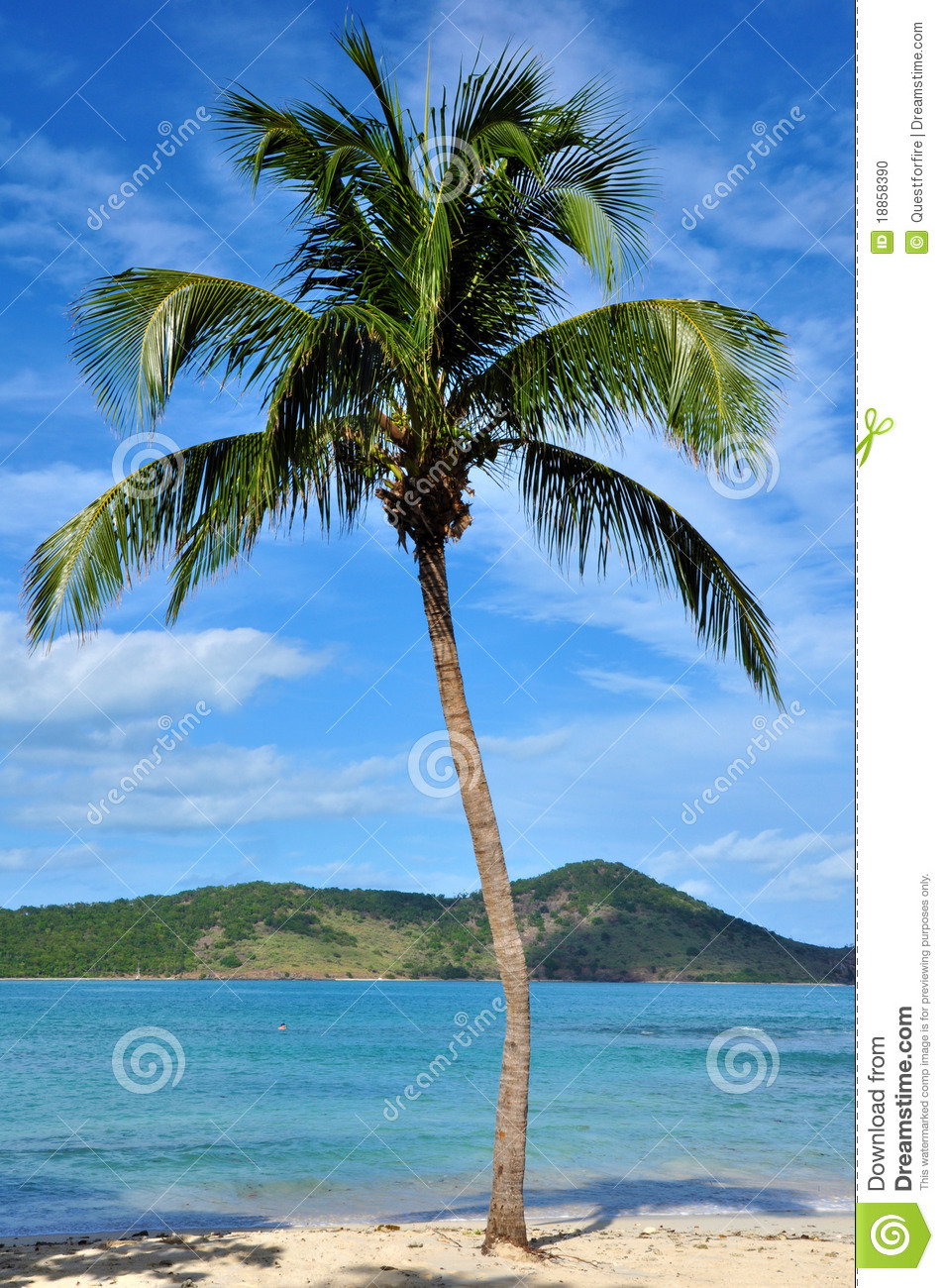 Palm Tree Stock Photo - Image: 18858390