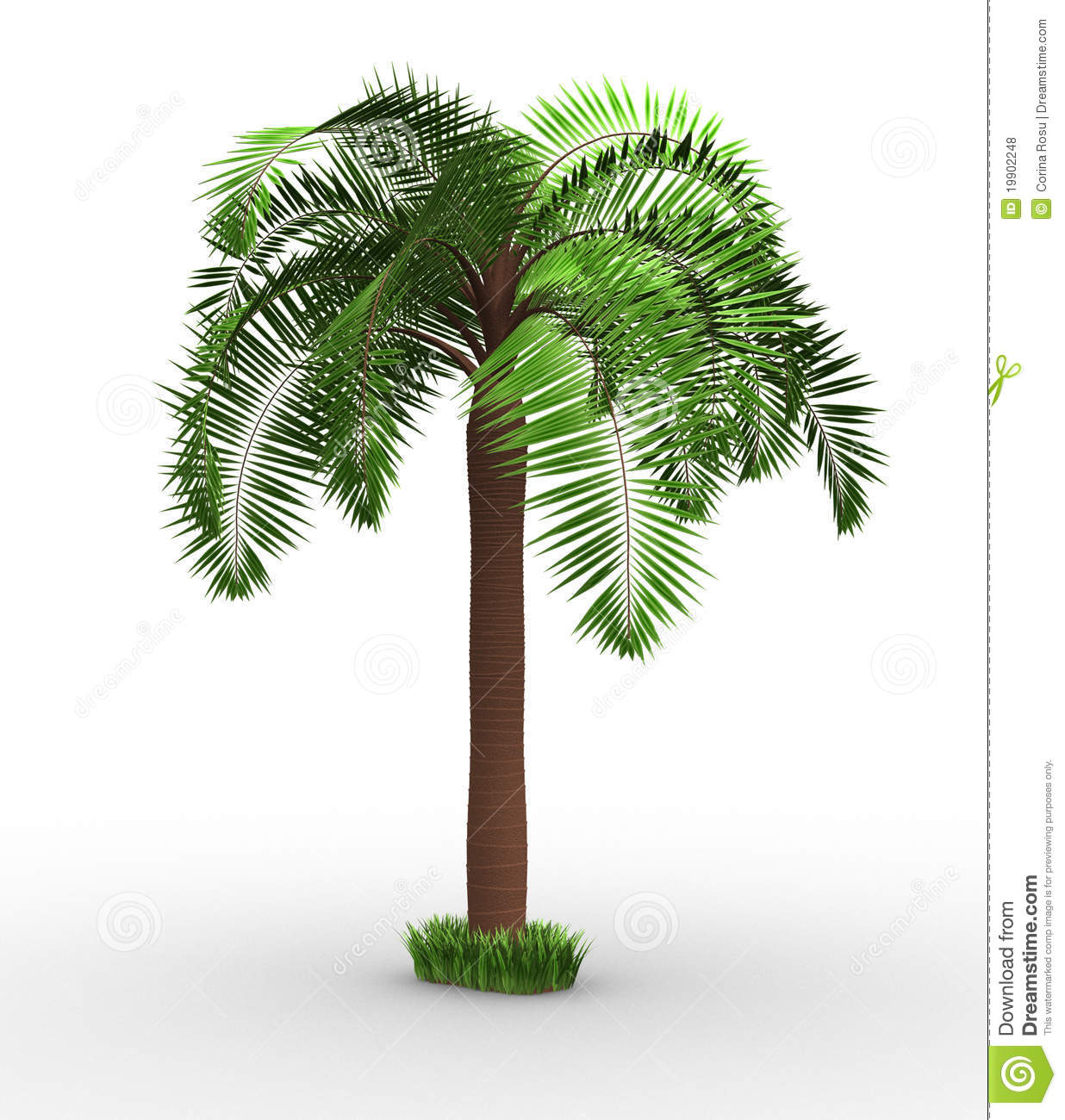 Palm-tree Royalty Free Stock Photos - Image: 19902248 - photo#32