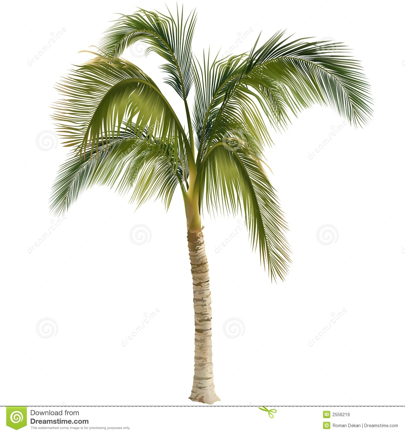 Palm Tree Royalty Free Stock Images - Image: 2556219