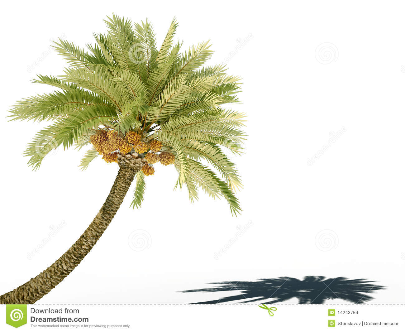 Palm tree 3d cg stock illustration  Illustration of ocean - 14243754