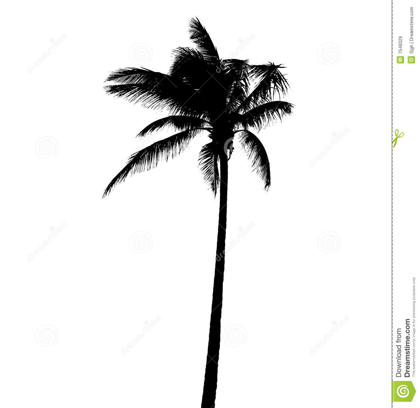 palm tree stock image image of outdoor plant nature 7546029