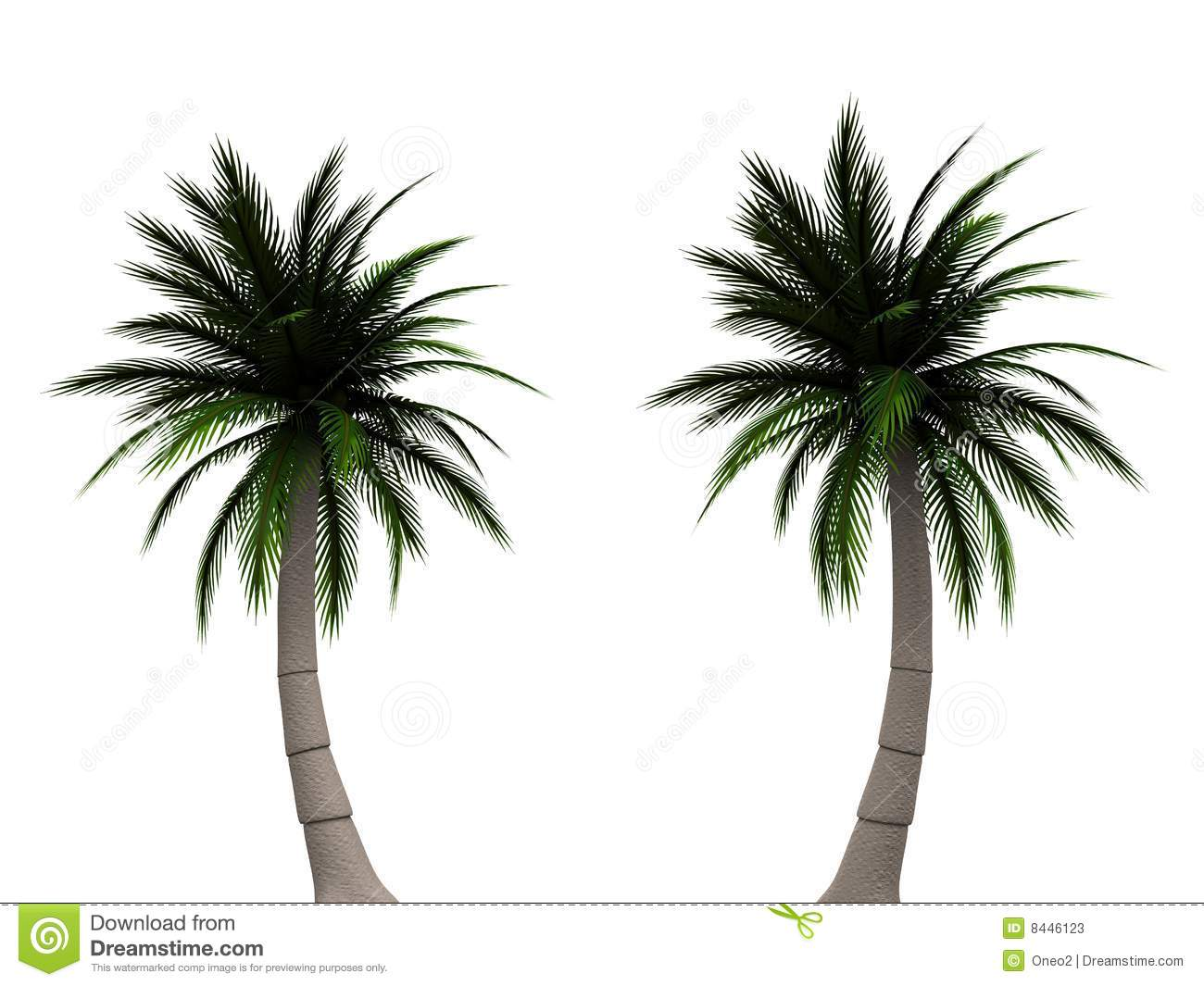 Palm Tree Stock Photos - Image: 8446123 - photo#40