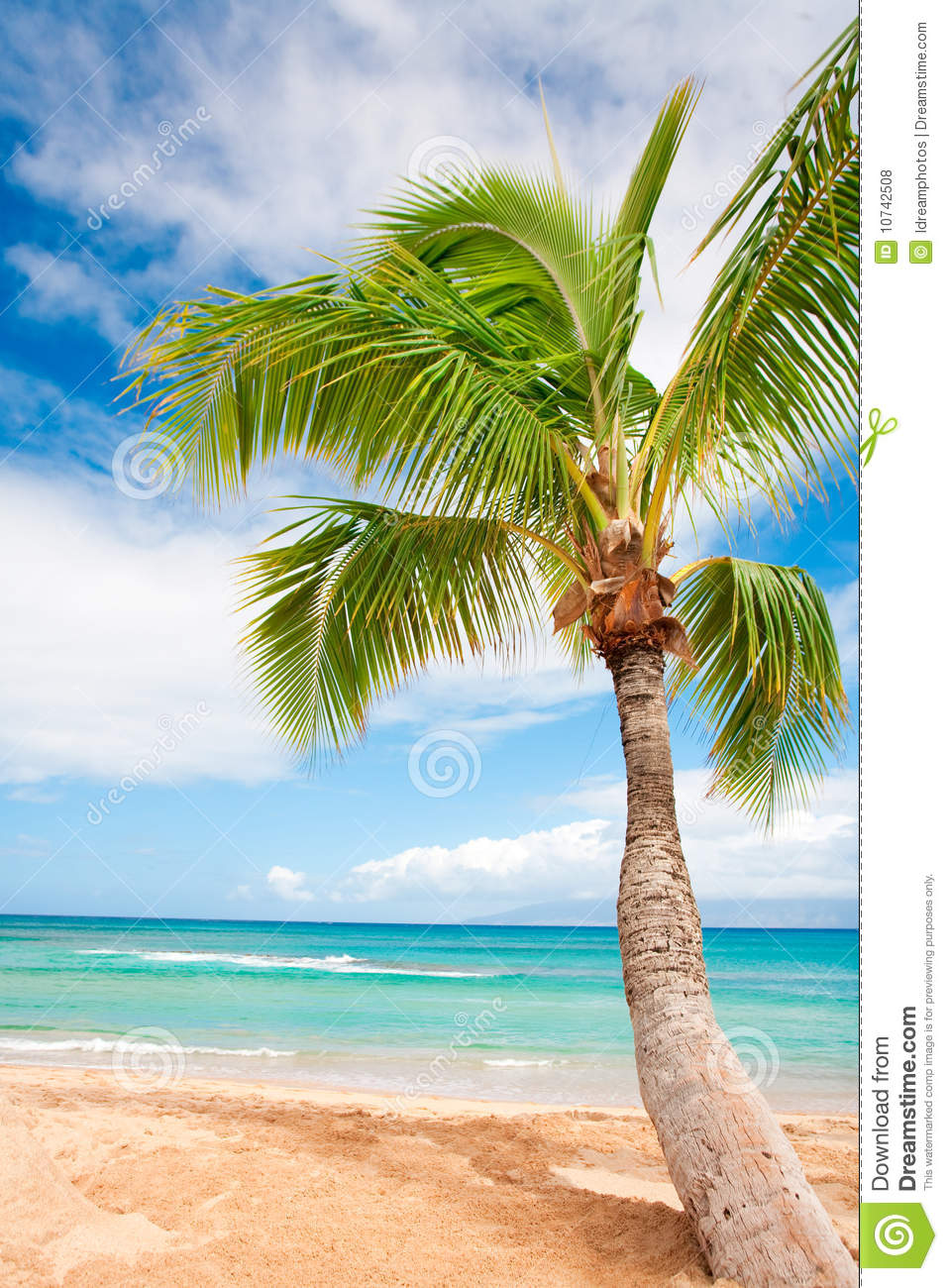 Palm tree beach background stock photo image of beautiful 10742508 palm tree beach background voltagebd Image collections