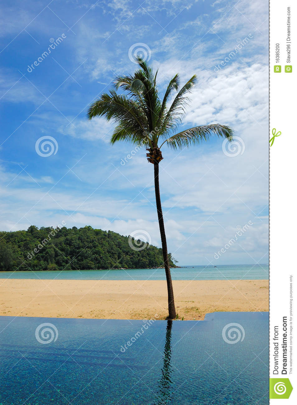 Palm tree at the beach and swimming pool stock photo - Palm beach swimming pool ...