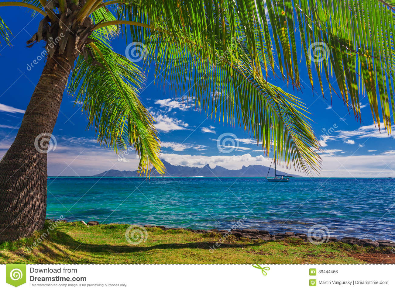 Palm Tree On The Beach On Tahiti With The View Of Moorea