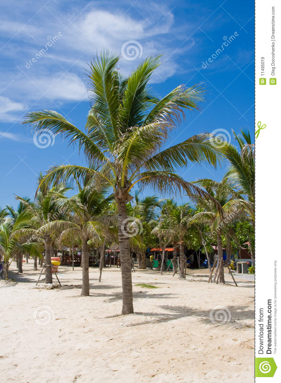 Palm Tree On The Beach.Thailand . Stock Image