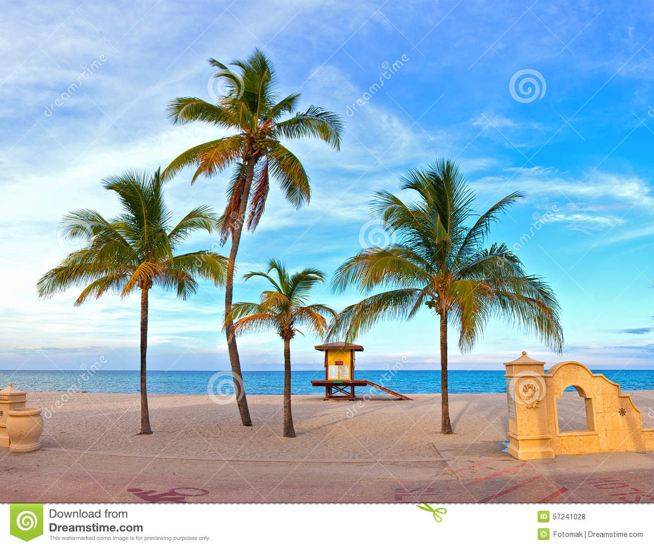 Palm Tree Beach: Palm Tree On A Beautiful Sunny Summer Afternoon In