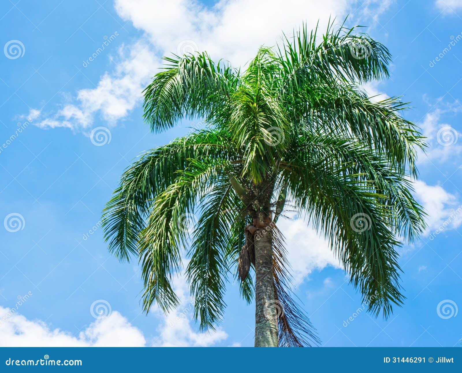 trees palm blue - photo #17