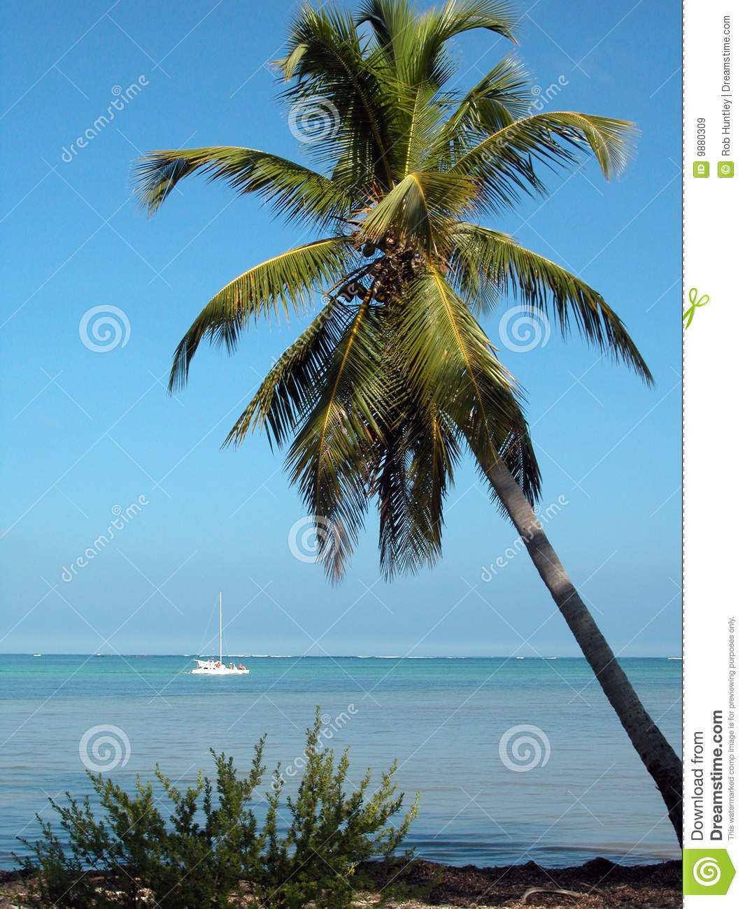 palm trees boat-#26