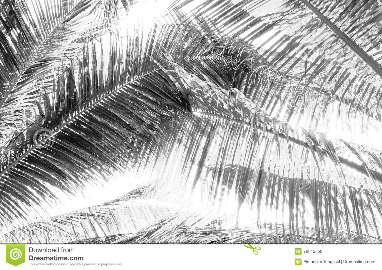 Palm tree branch against the light