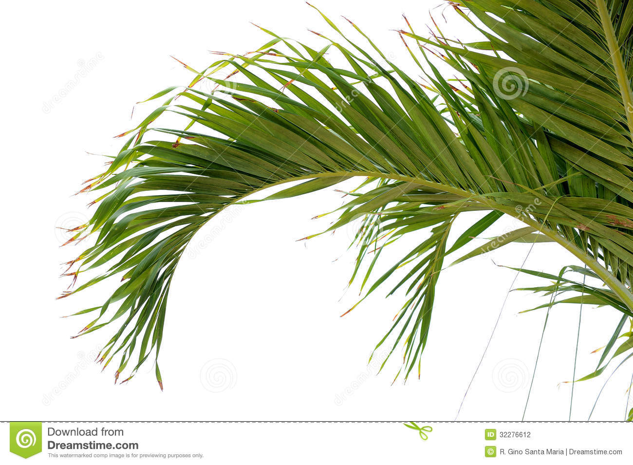 Palm Tree Branch Stock Photography - Image: 32276612