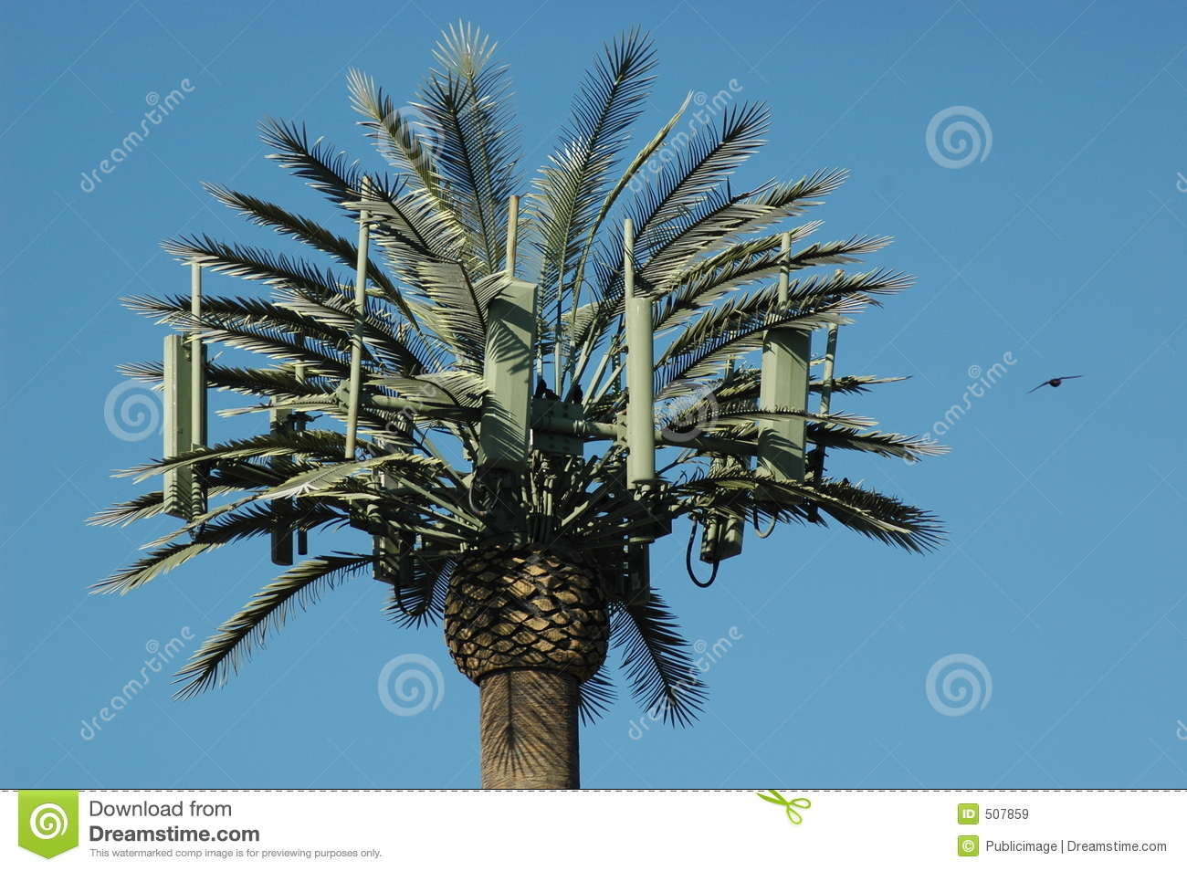 palm tree cell tower and bird royalty free stock images image