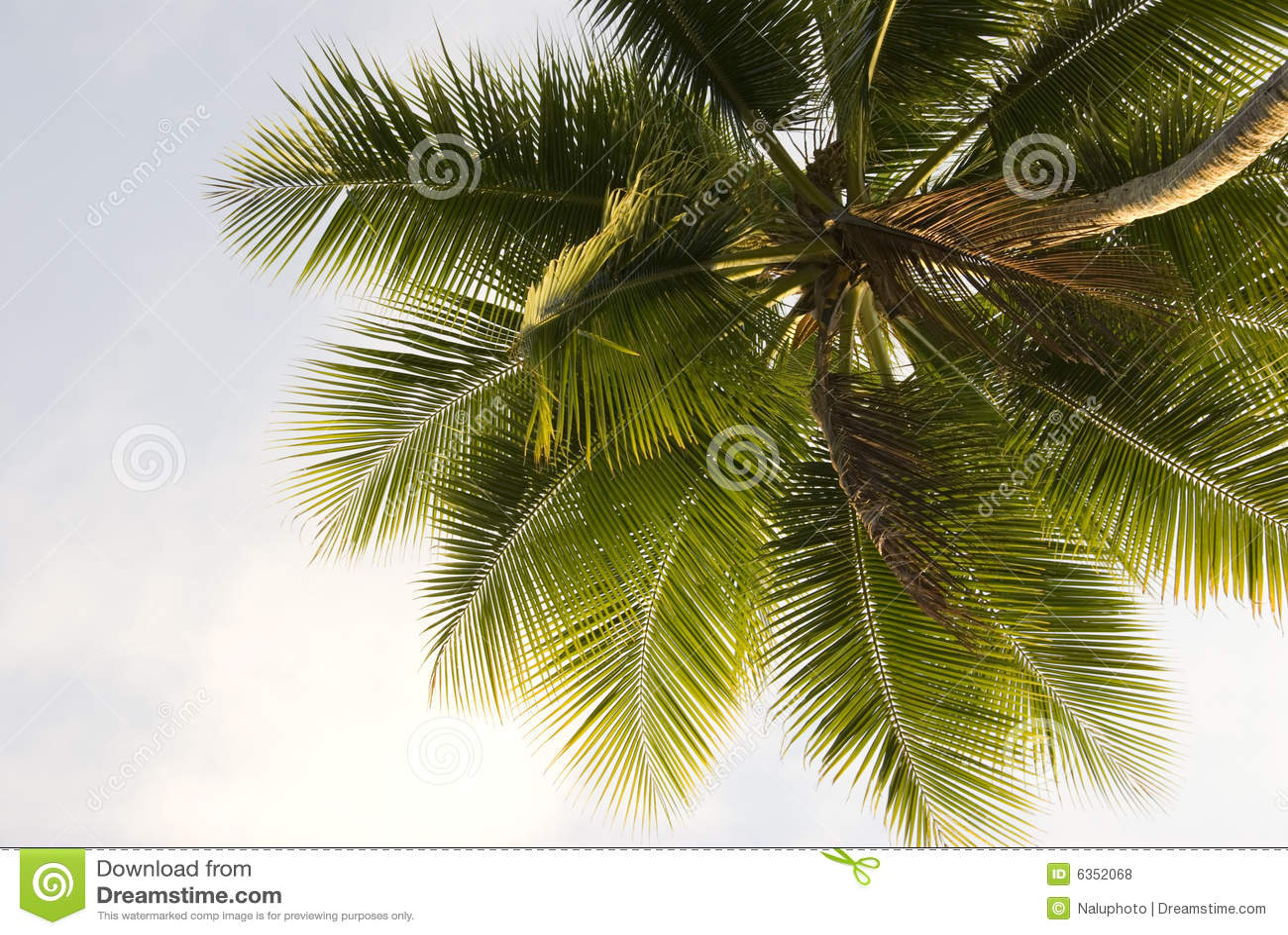 Palm Tree Close-up