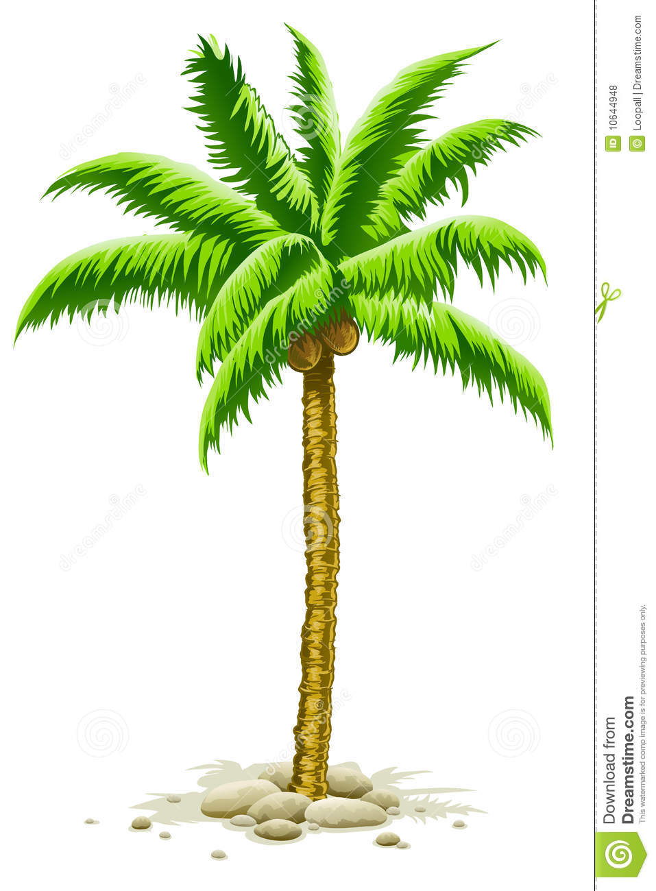 Palm Tree With Coconut Fruits Stock Illustration - Illustration of ...