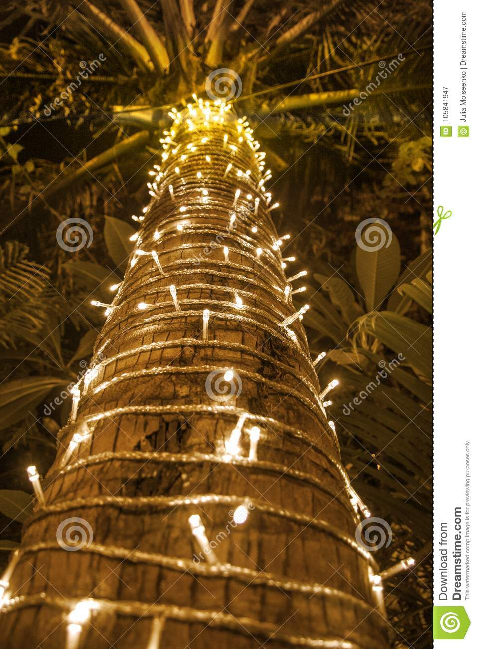 download palm tree decorated with garland christmas tree lots of lights in the night - Palm Tree Decorated For Christmas