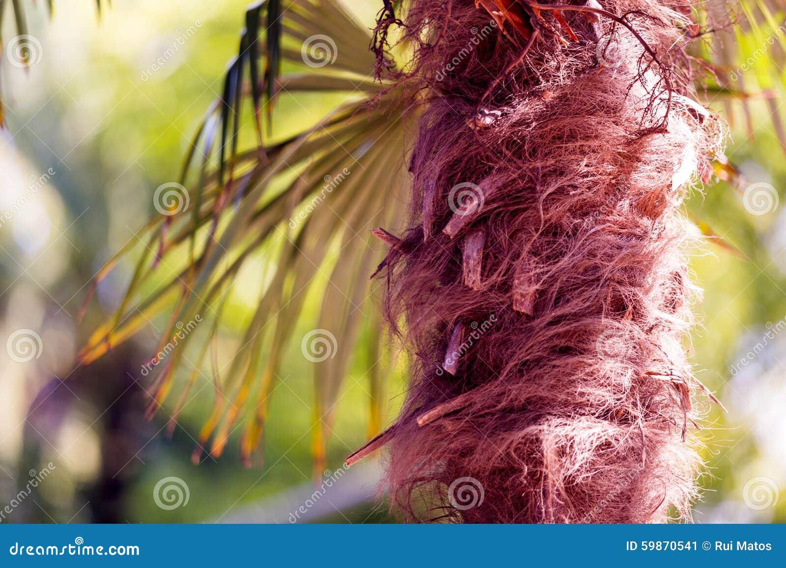 Palm tree fibers