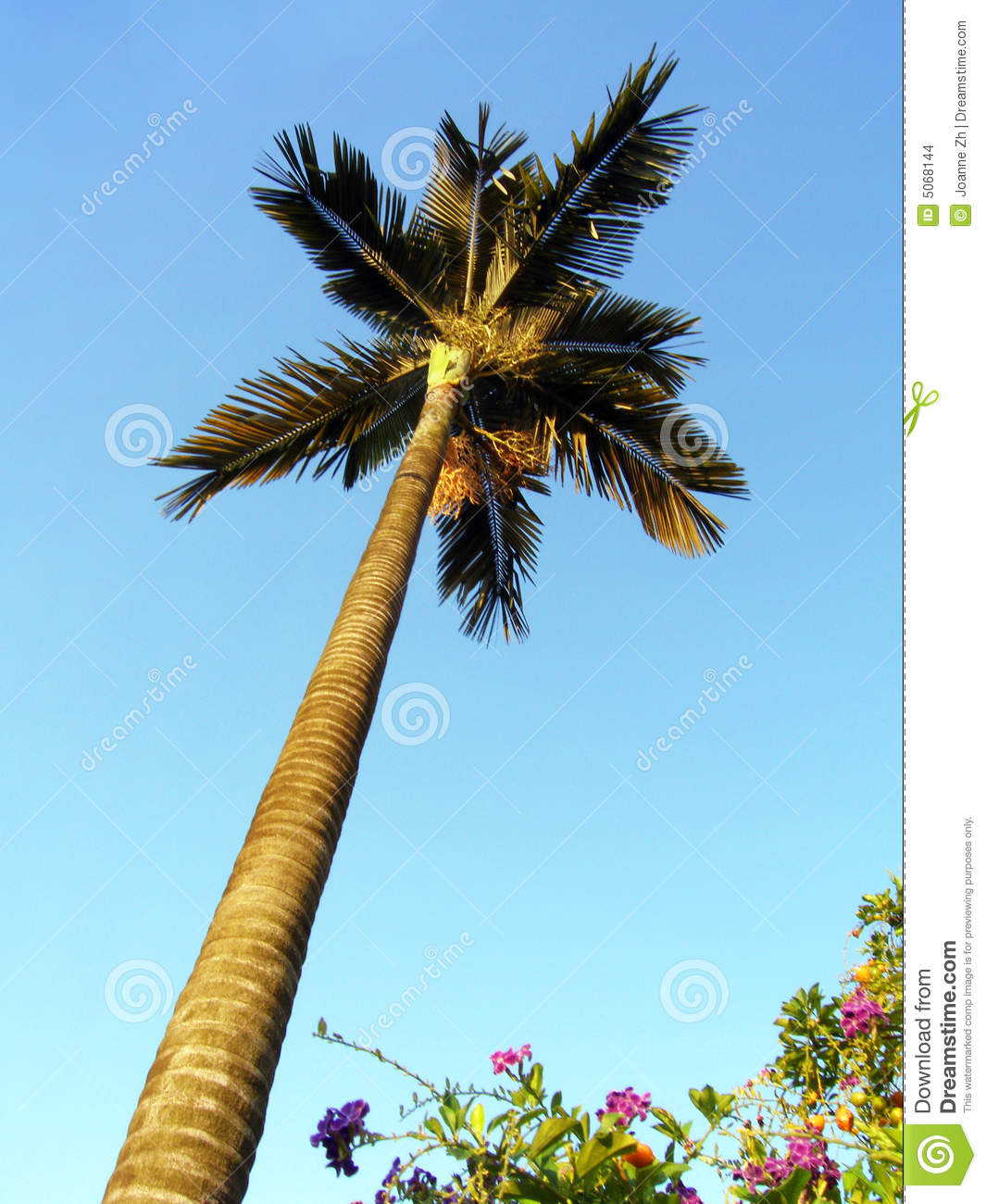 how to preserve cut palm fronds