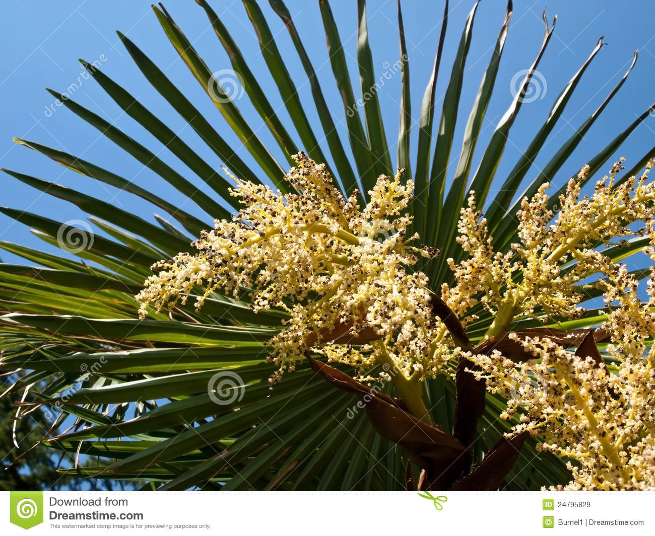 palm tree flowers royalty free stock images image 24795829. Black Bedroom Furniture Sets. Home Design Ideas