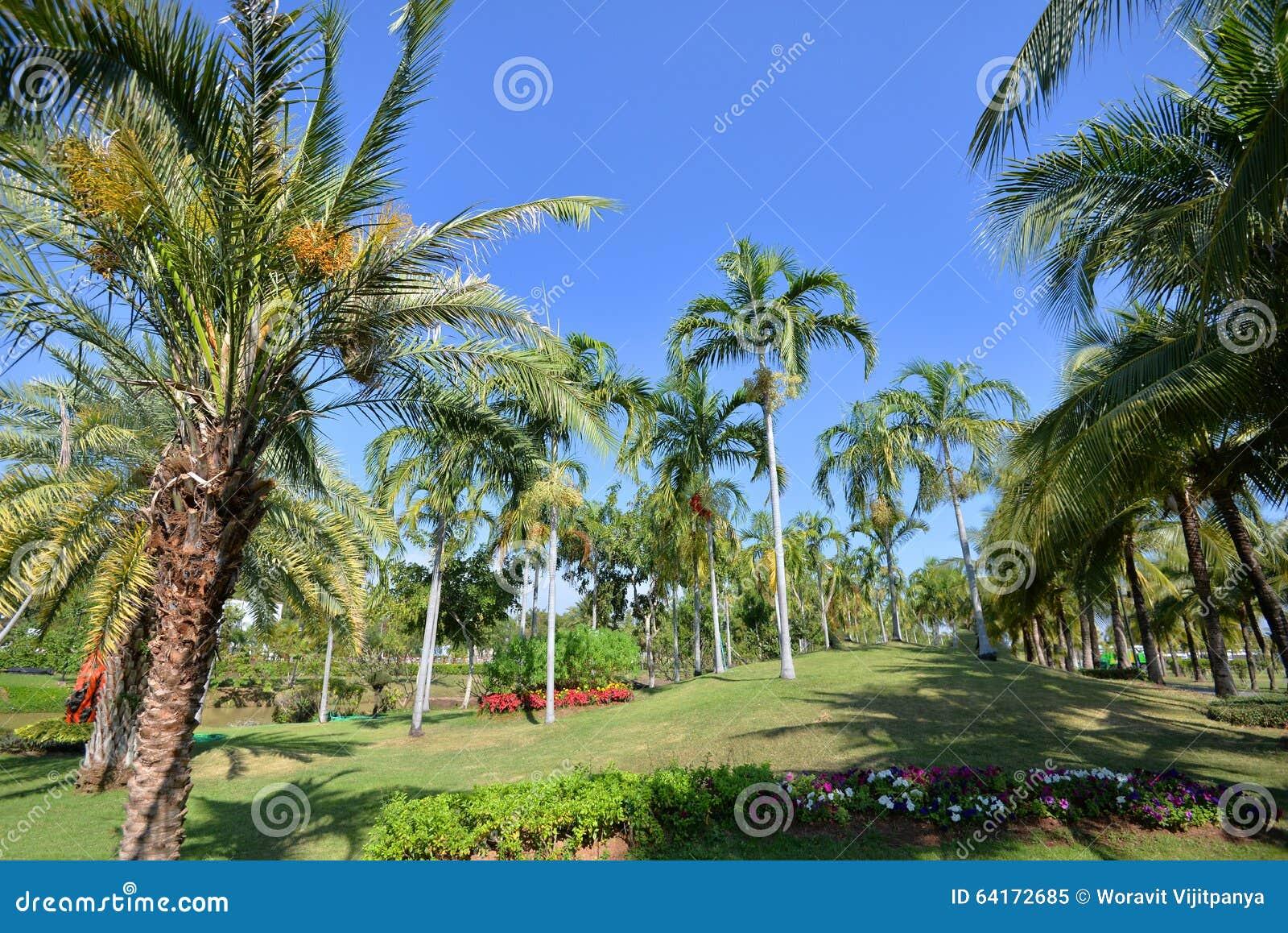 Palm Tree Stock Photo - Image: 64172685