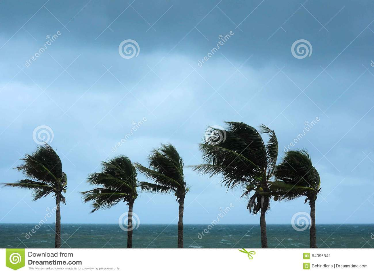 what did the hurricane say to the palm tree