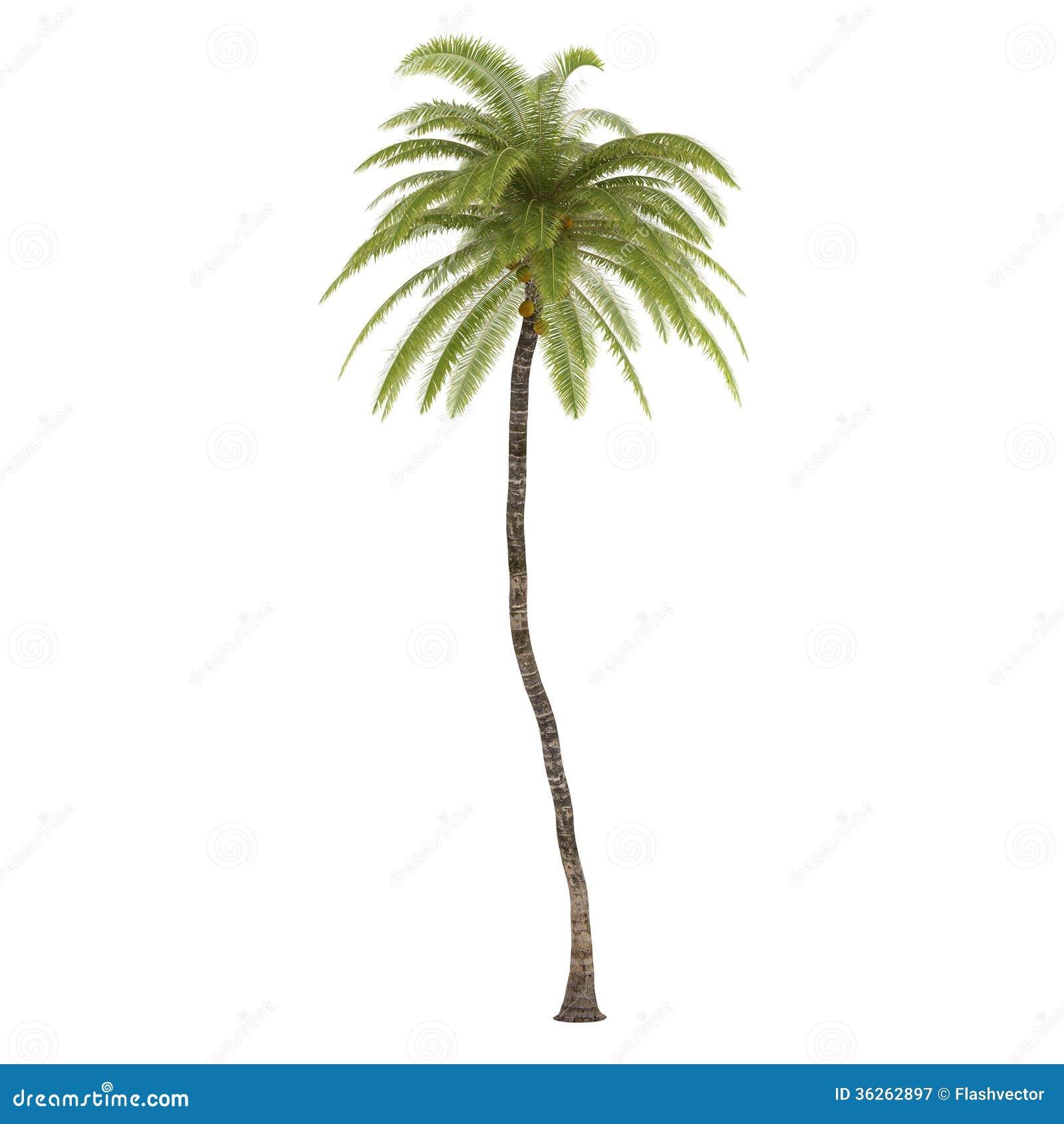 palm tree isolated cocos nucifera royalty free stock clip art beach ball bucket clip art beach ball and toys