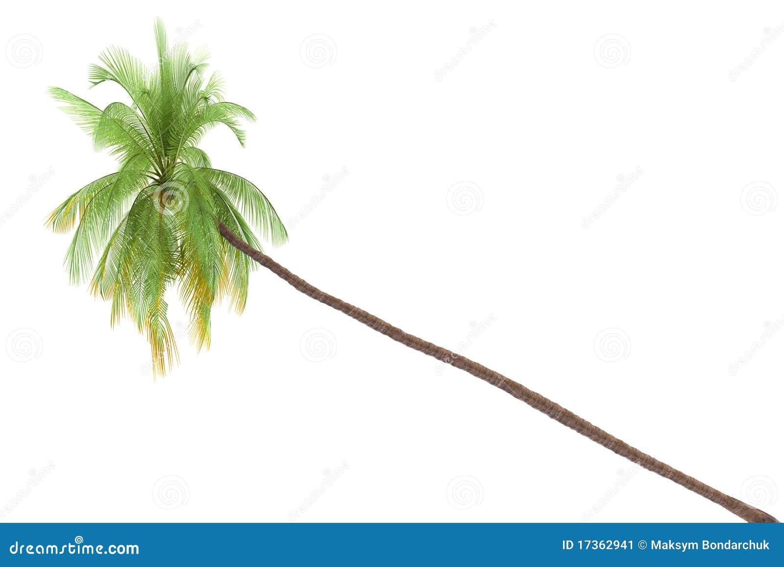 palm tree white - photo #38