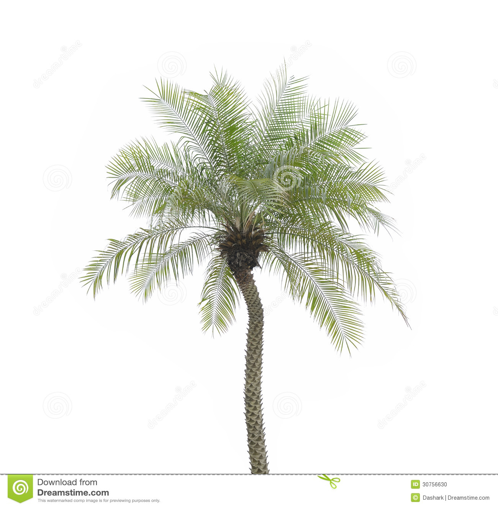 palm tree white - photo #27