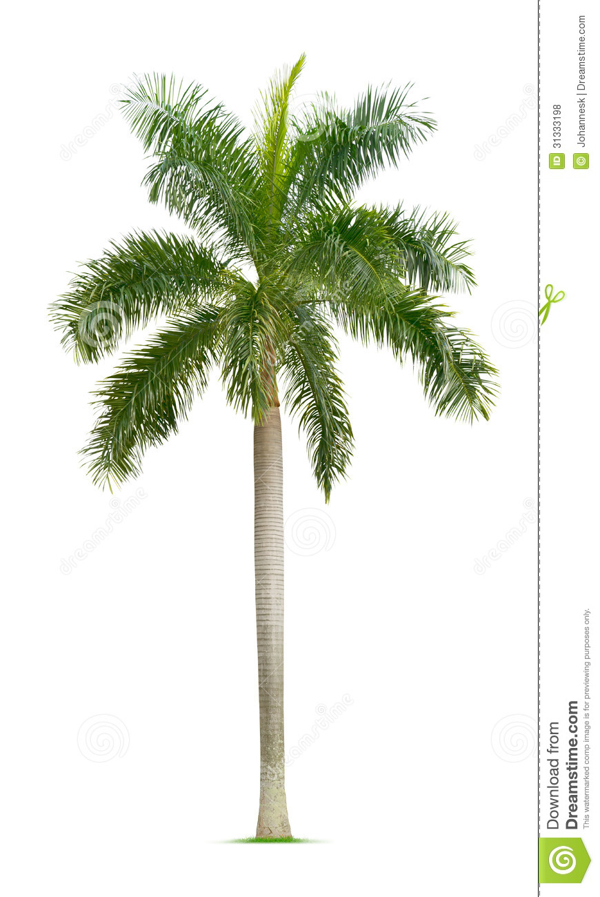 Palm Tree Royalty Free Stock Photos  Image: 31333198