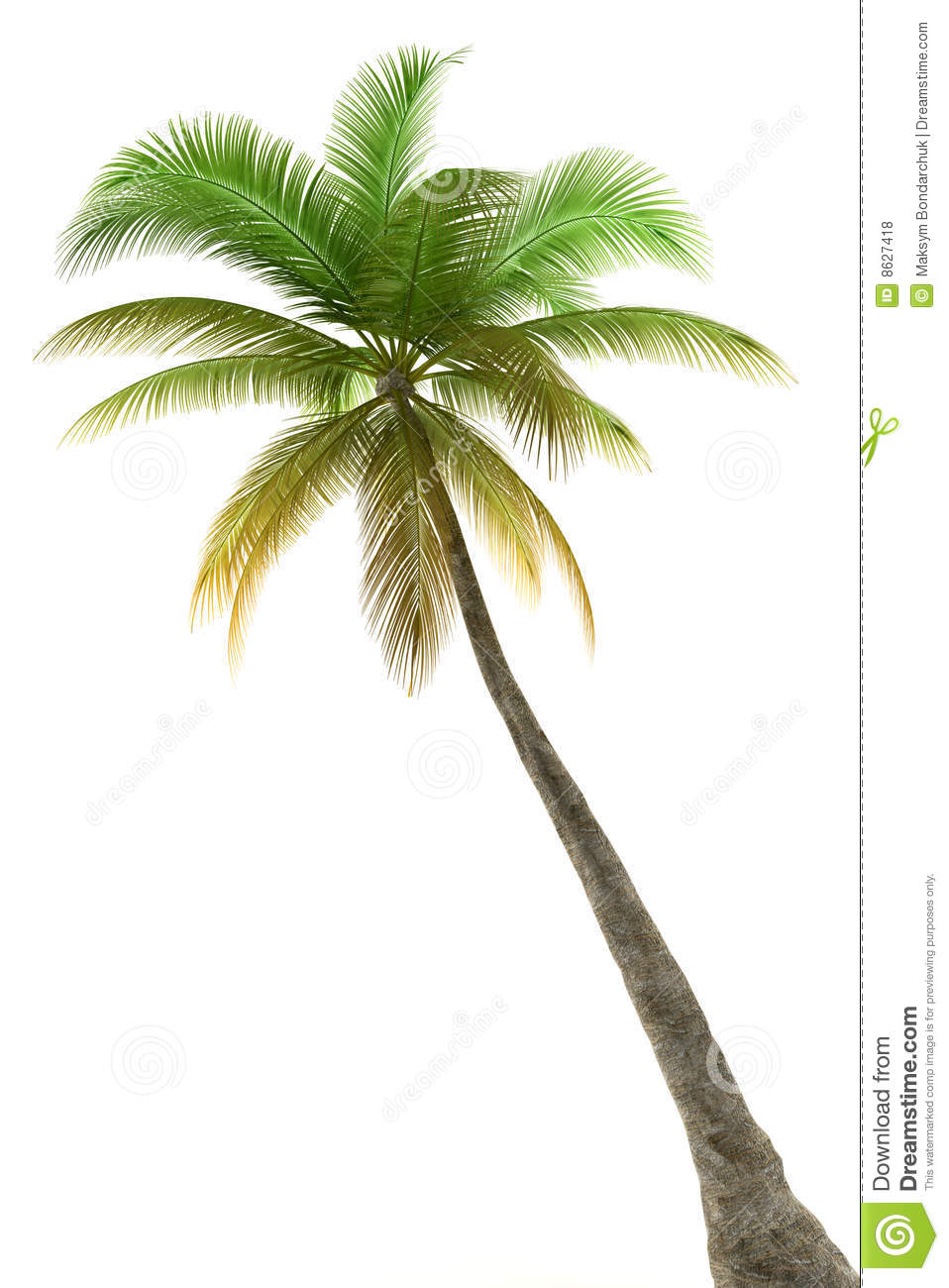 Palm Tree Isolated On White Background Royalty Free Stock Photos Image 8627418