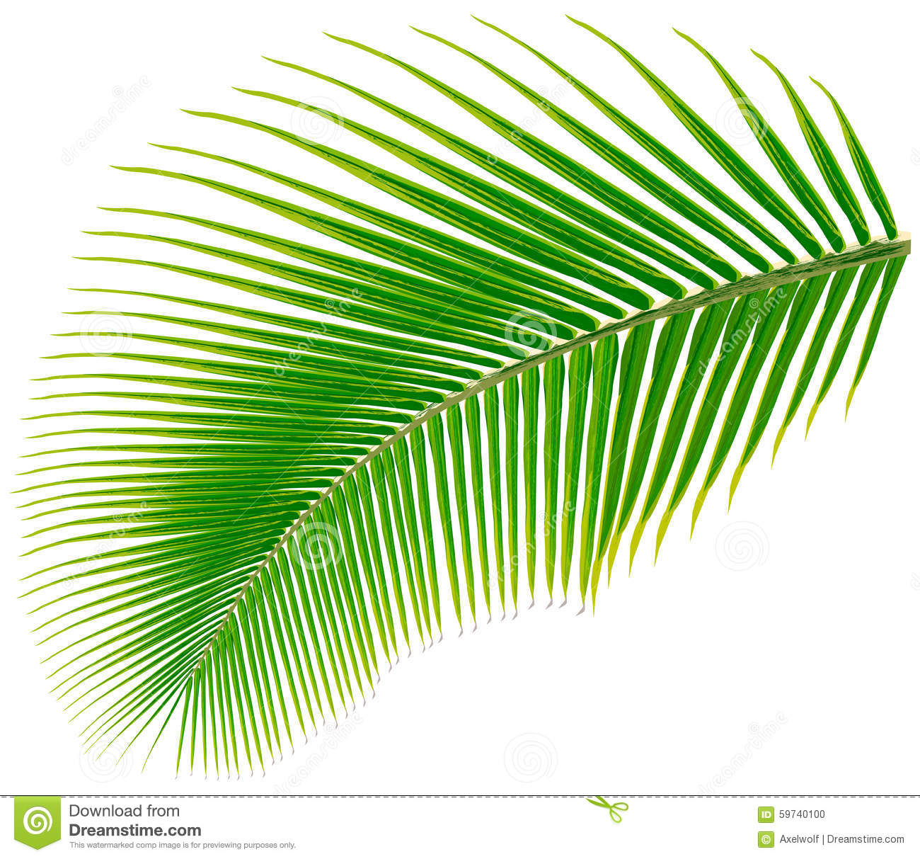 Palm tree leaf vector illustration stock vector image 59740100 palm tree leaf vector illustration pronofoot35fo Image collections
