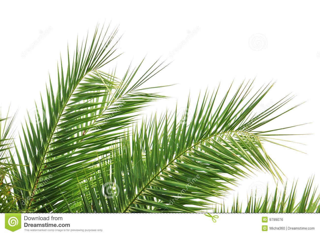 Palm Tree Leaves Royalty Free Stock Image - Image: 9799076