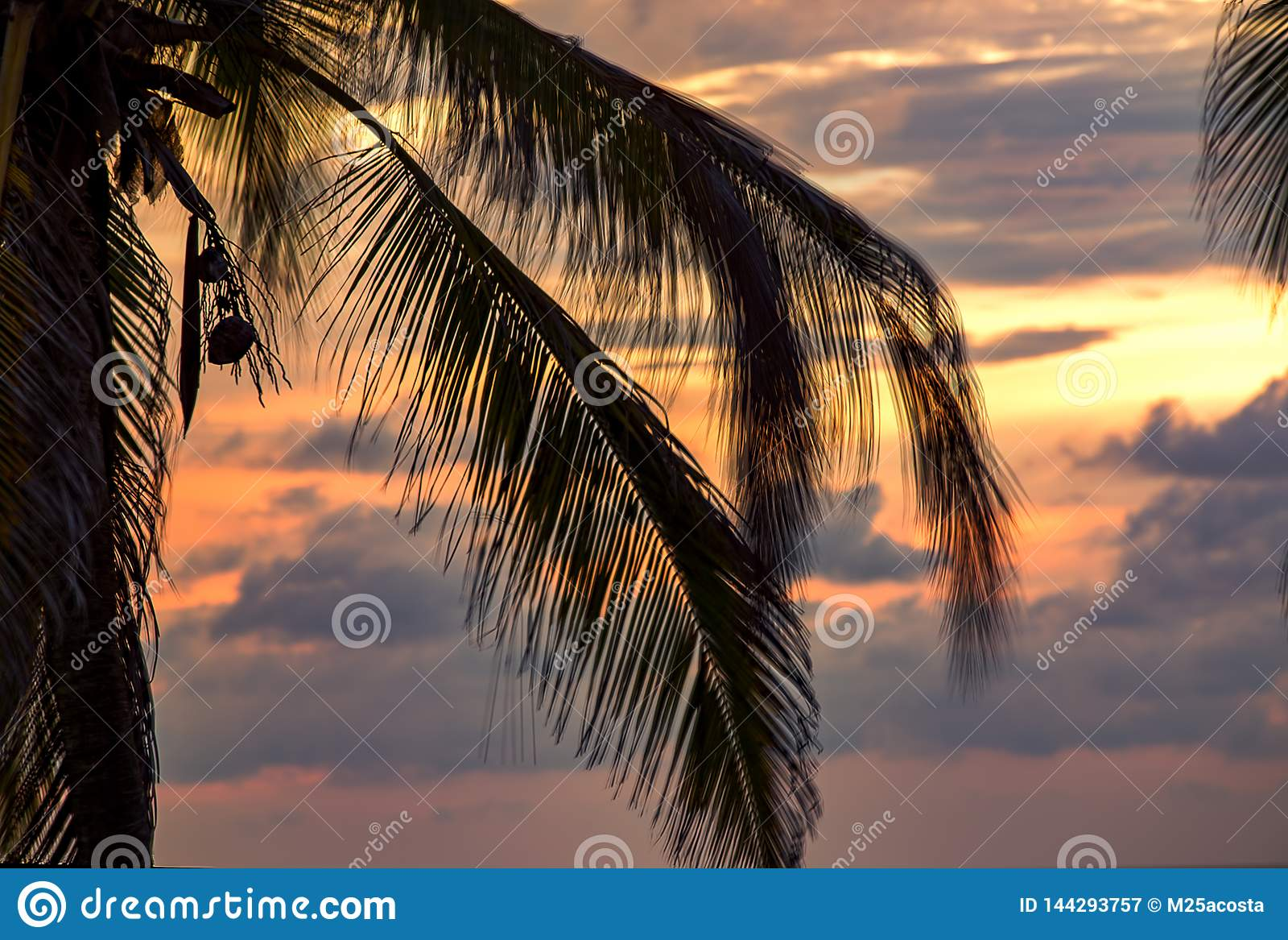 Palm tree leaves blown by the wind