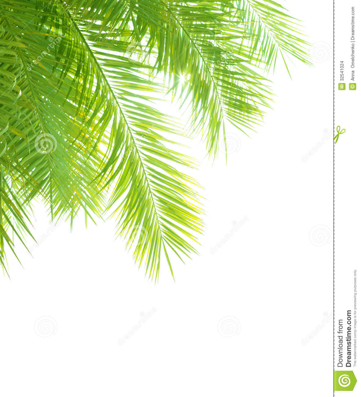 Palm tree leaves border stock photo image of branch 32541024 royalty free stock photo download palm tree leaves pronofoot35fo Image collections
