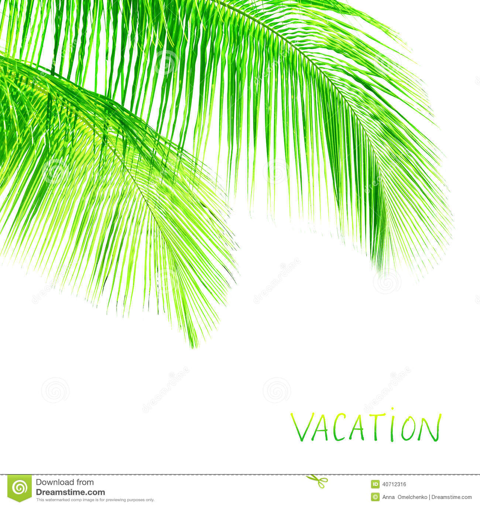 Palm tree leaves border stock photo. Image of exotic ...