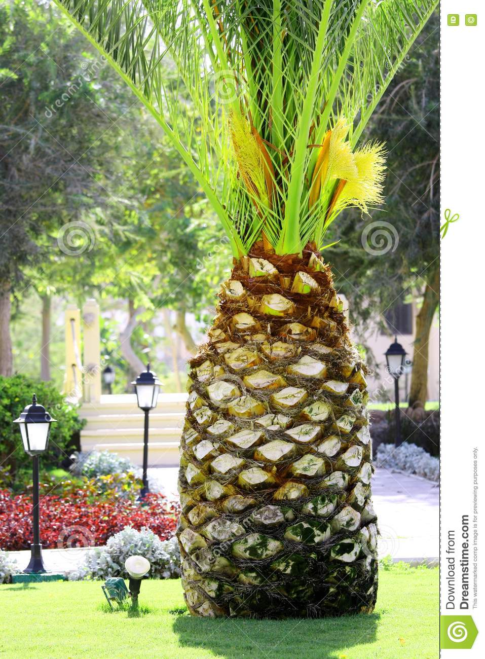 Palm Tree Like Big Pineapple Stock Photo Image 17309300